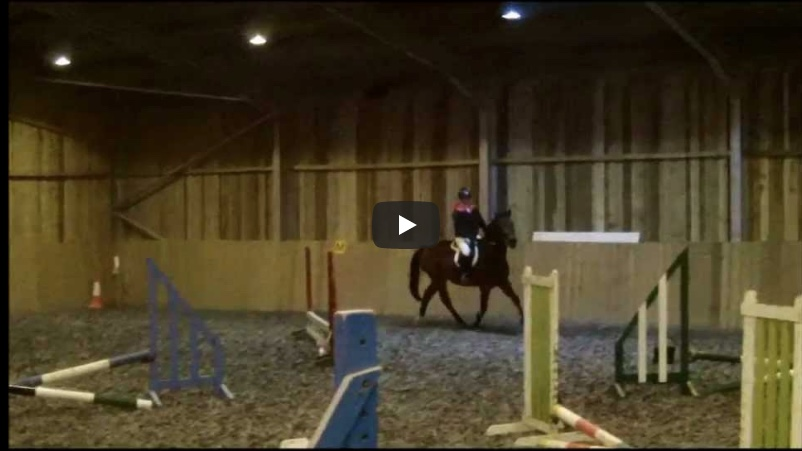 horse surfaces